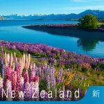 新西蘭工作假期簽證